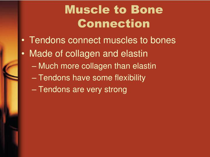 Muscle to Bone Connection