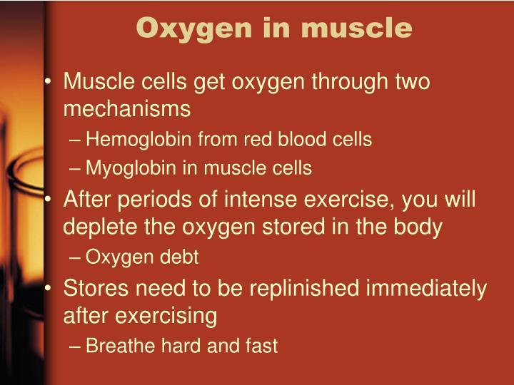 Oxygen in muscle