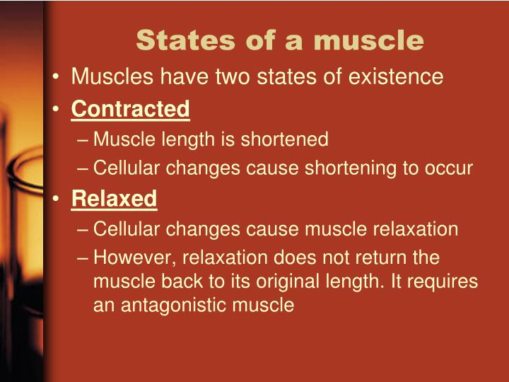 States of a muscle