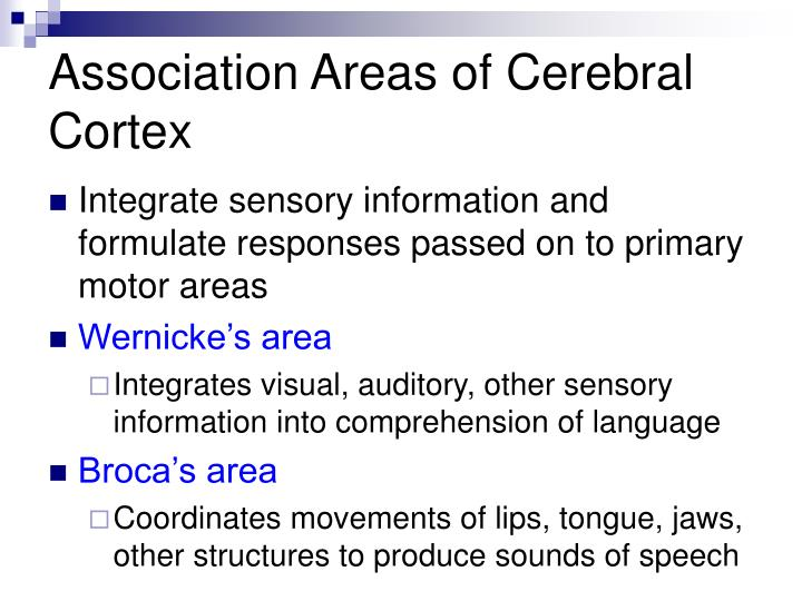 Association Areas of Cerebral Cortex