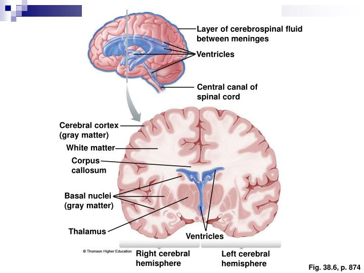 Layer of cerebrospinal fluid between meninges