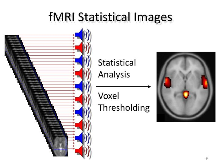fMRI Statistical Images