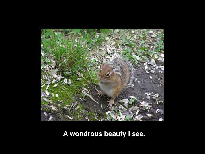 A wondrous beauty I see