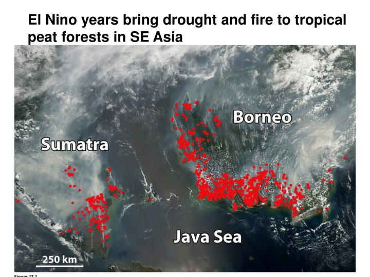 El Nino years bring drought and fire to tropical