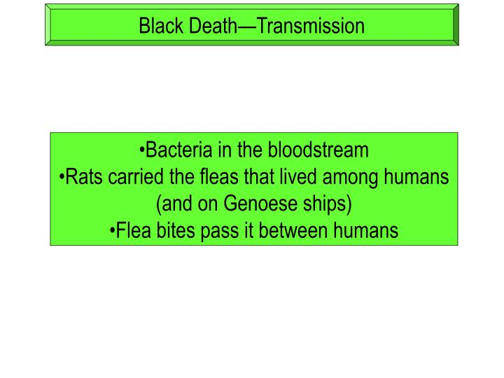 Black Death—Transmission
