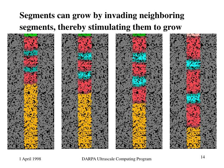 Segments can grow by invading neighboring