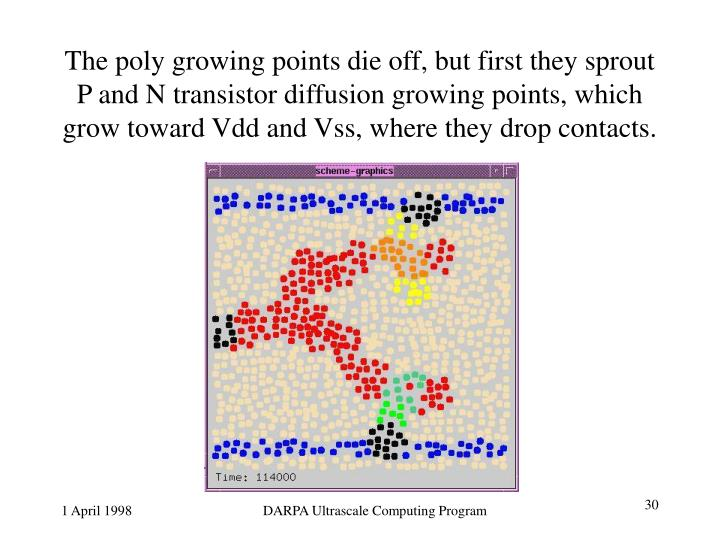 The poly growing points die off, but first they sprout P and N transistor diffusion growing points, which grow toward Vdd and Vss, where they drop contacts.