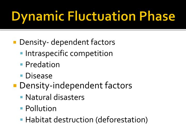 Dynamic Fluctuation Phase