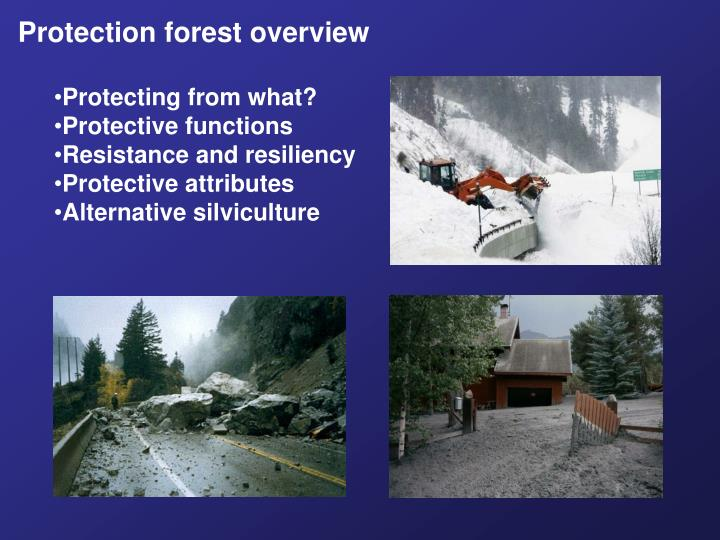 Protection forest overview