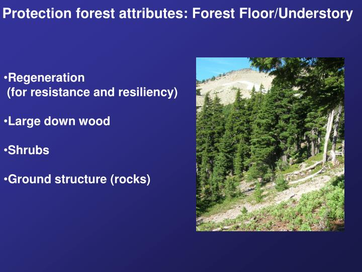 Protection forest attributes: Forest Floor/Understory