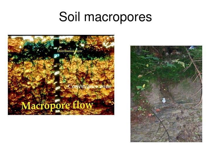 Soil macropores