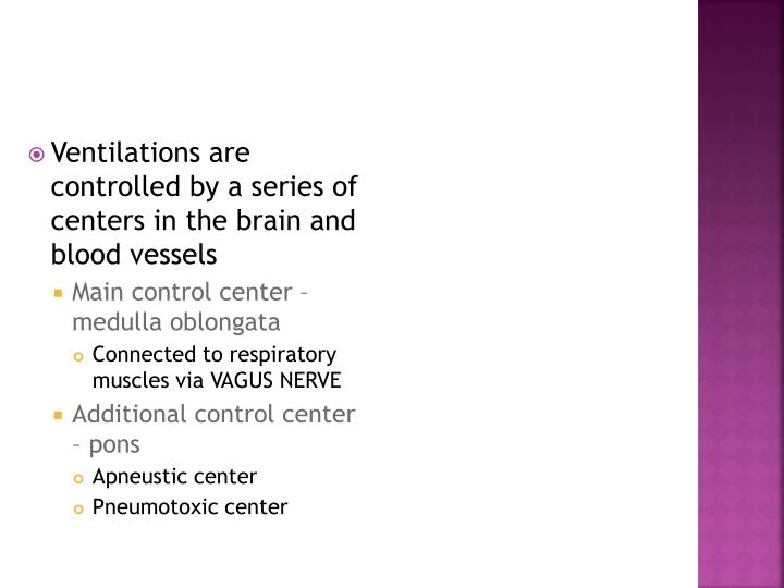 Ventilations are controlled by a series of centers in the brain and blood vessels