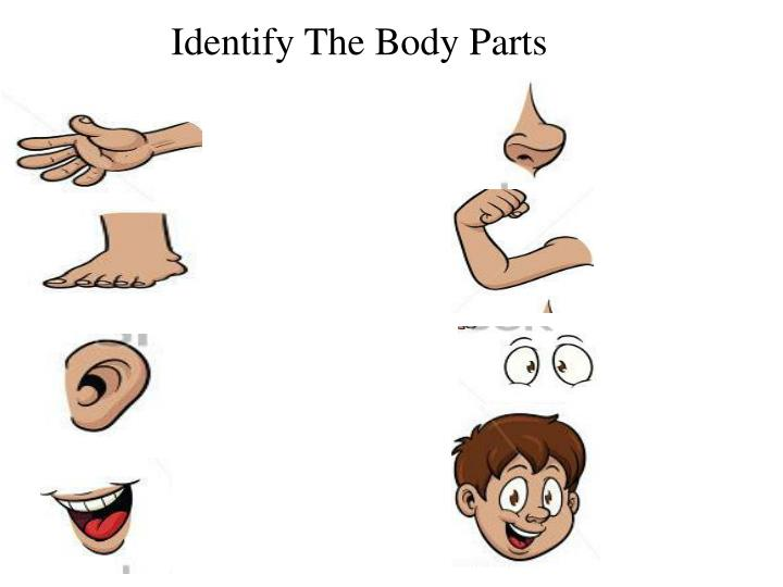 Identify The Body Parts