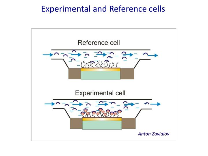 Experimental and Reference cells