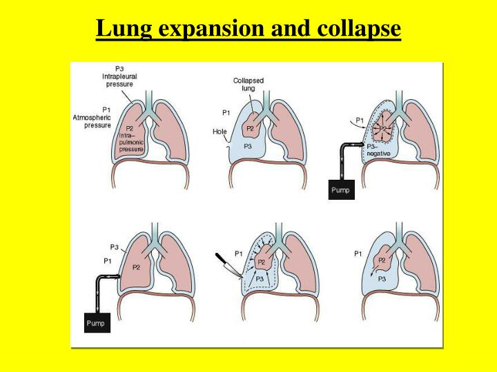 Lung expansion and collapse