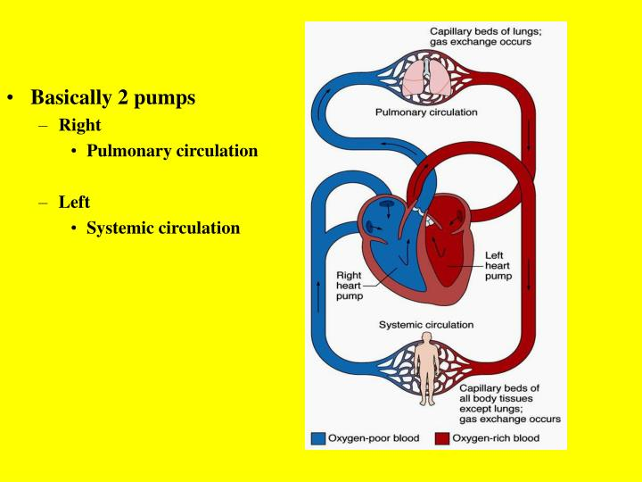 Basically 2 pumps