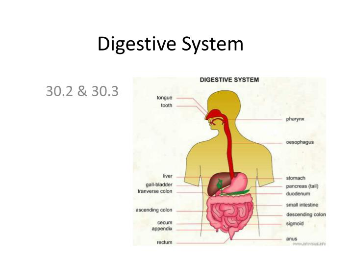 10 Tips to Burn Fat Quickly Digestive system video download