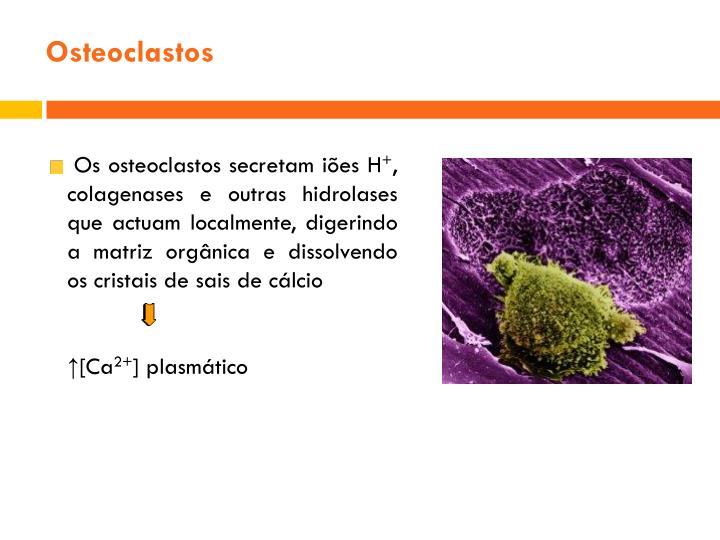 Osteoclastos