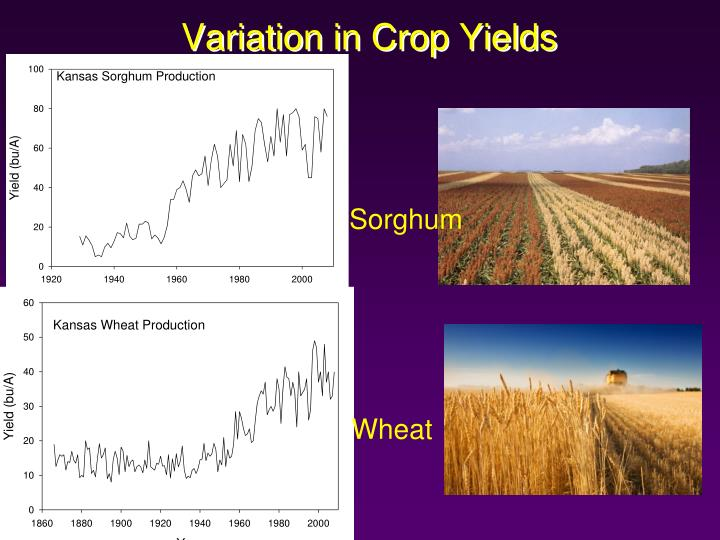 Variation in Crop Yields