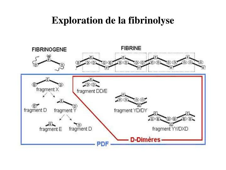 Exploration de la fibrinolyse