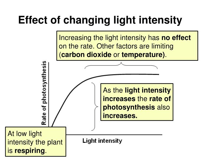 Effect of changing light intensity