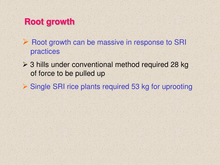 Root growth