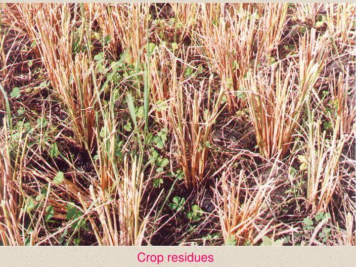 Crop residues