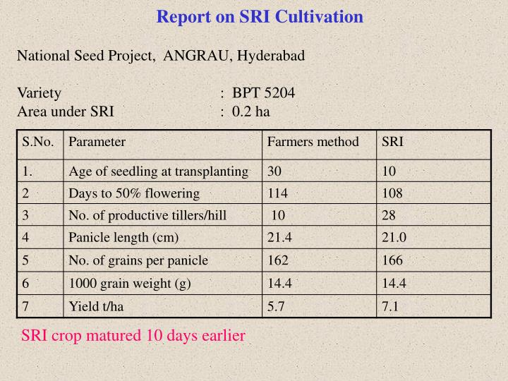 Report on SRI Cultivation
