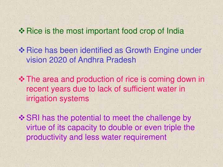 Rice is the most important food crop of India