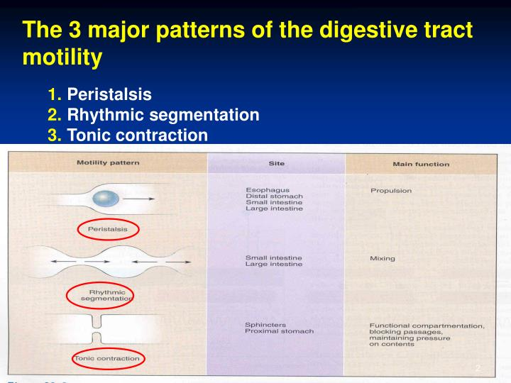 The 3 major patterns of the digestive tract motility