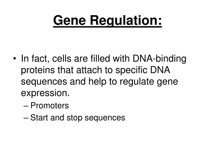 Gene Regulation: