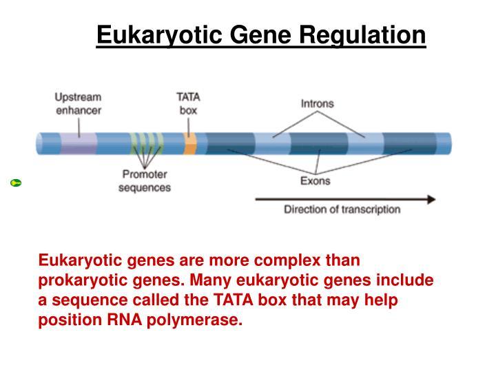 Eukaryotic GeneRegulation