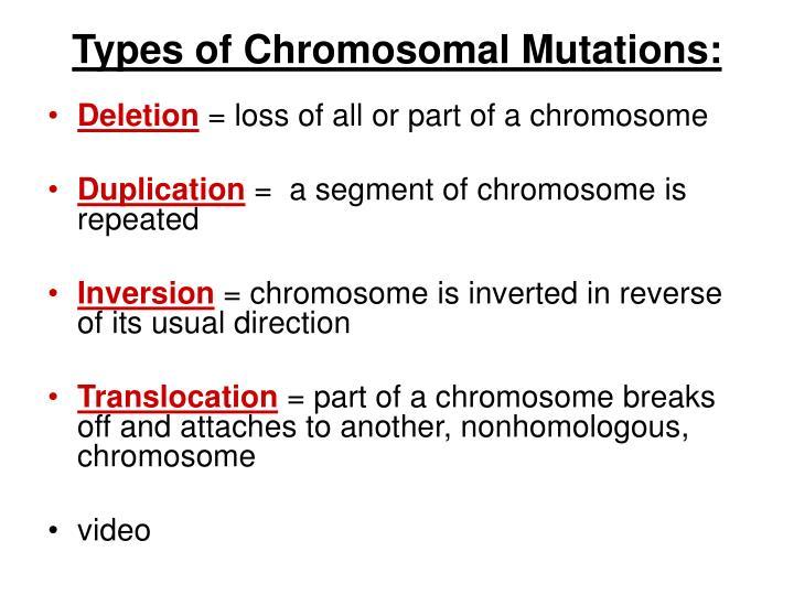 Types of Chromosomal Mutations:
