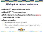 biological neural networks1