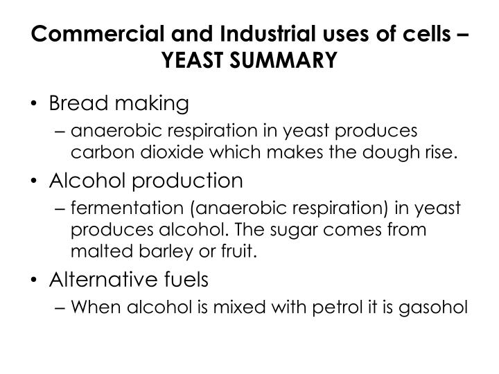 Commercial and Industrial uses of cells – YEAST SUMMARY