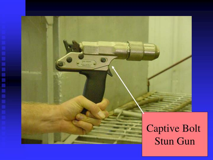 Captive Bolt