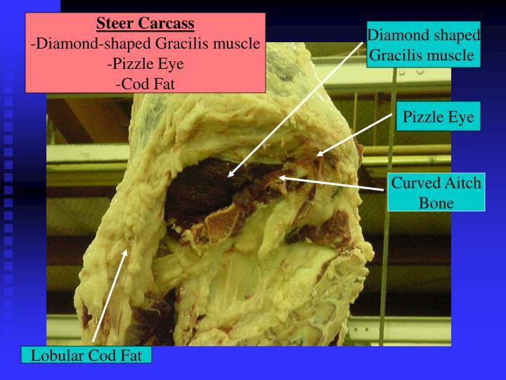 Steer Carcass