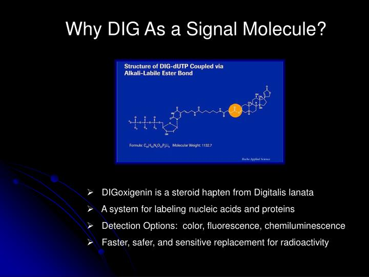 Why DIG As a Signal Molecule?