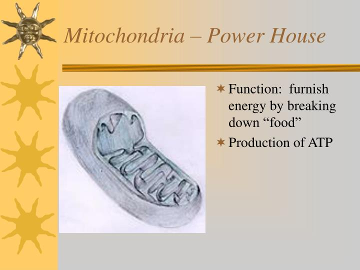 Mitochondria – Power House