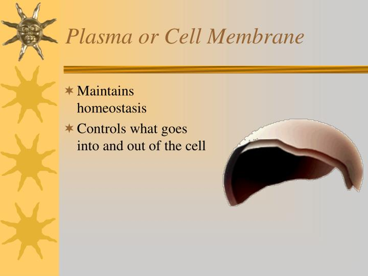 Plasma or Cell Membrane