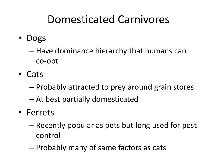 Domesticated Carnivores