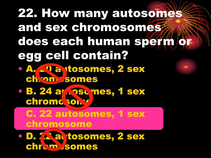 22. How many autosomes and sex chromosomes does each human sperm or egg cell contain?