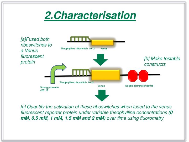 2.Characterisation