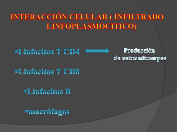 INTERACCIÓN CELULAR ( INFILTRADO LINFOPLASMOCITICO)