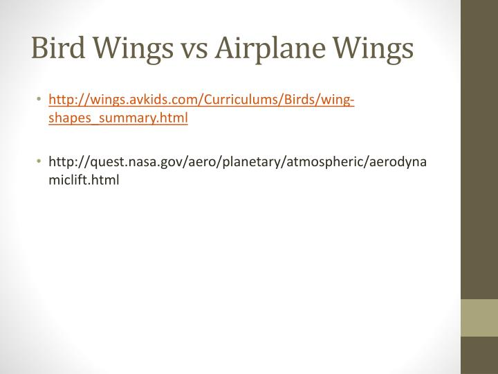 Bird wings vs airplane wings