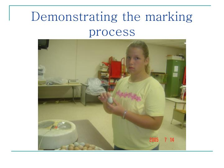 Demonstrating the marking process