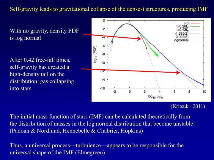 Self-gravity leads to gravitational collapse of the densest structures, producing IMF