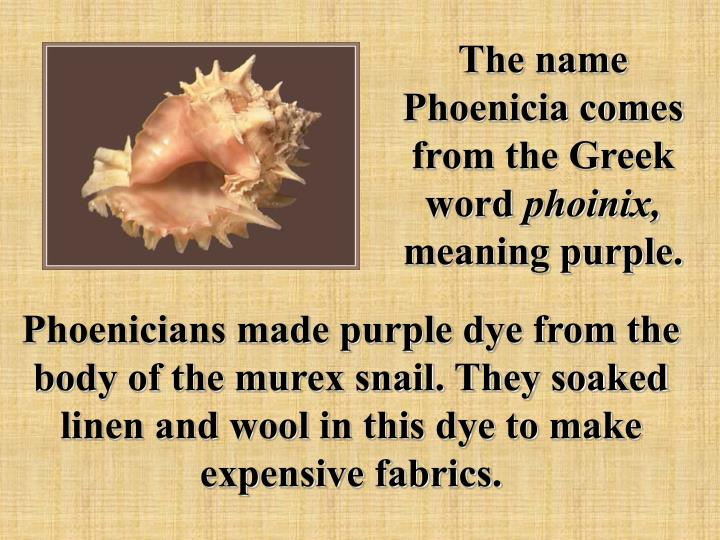 The name Phoenicia comes from the Greek word