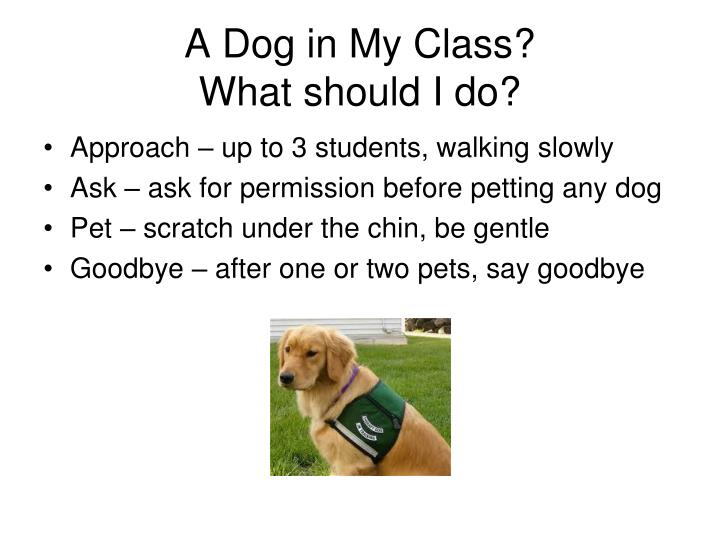 A Dog in My Class?