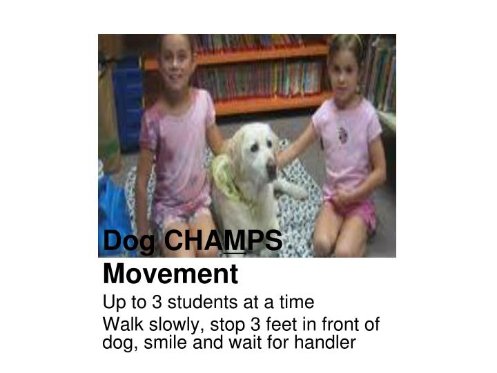 Dog CHA